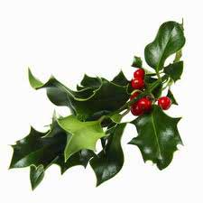 Buy Mistletoe For Sale